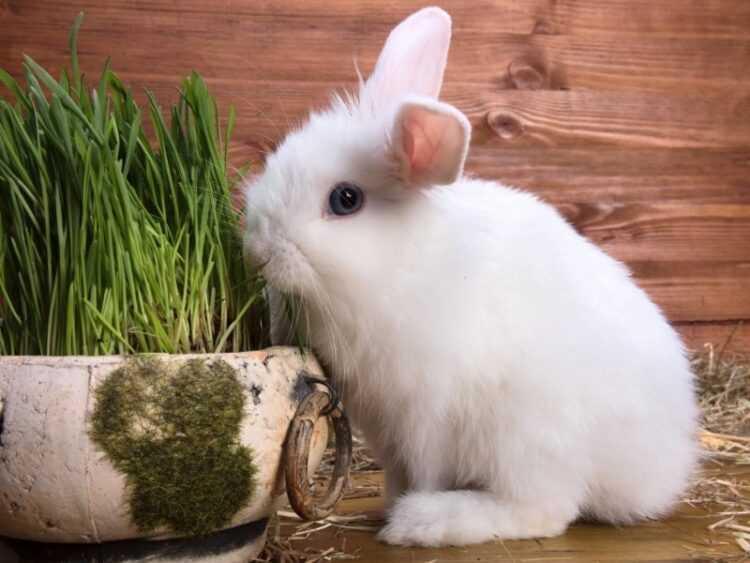Декоративные кролики: интересные факты. породы, виды, как содержать, размеры, что едят, сколько живут (110 фото)