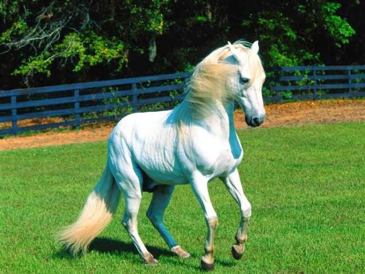 Домашняя лошадь: описание пород, виды, особенности содержания и ухода, окрасы, что едят, сколько живут (140 фото)