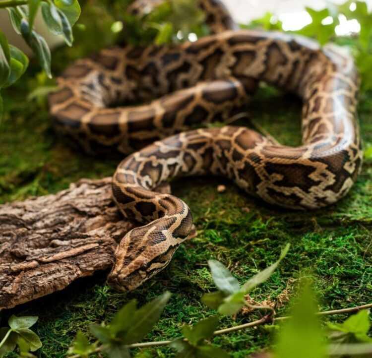 Самые большие змеи: фото, виды, названия, описания, где обитают, жизненный цикл, фото, интересные факты
